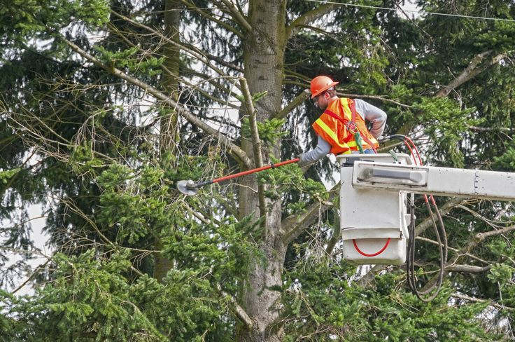 Bonds for Tree Trimmers